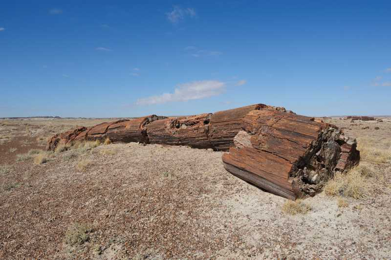 Petrified Forest N.P., 10.2009